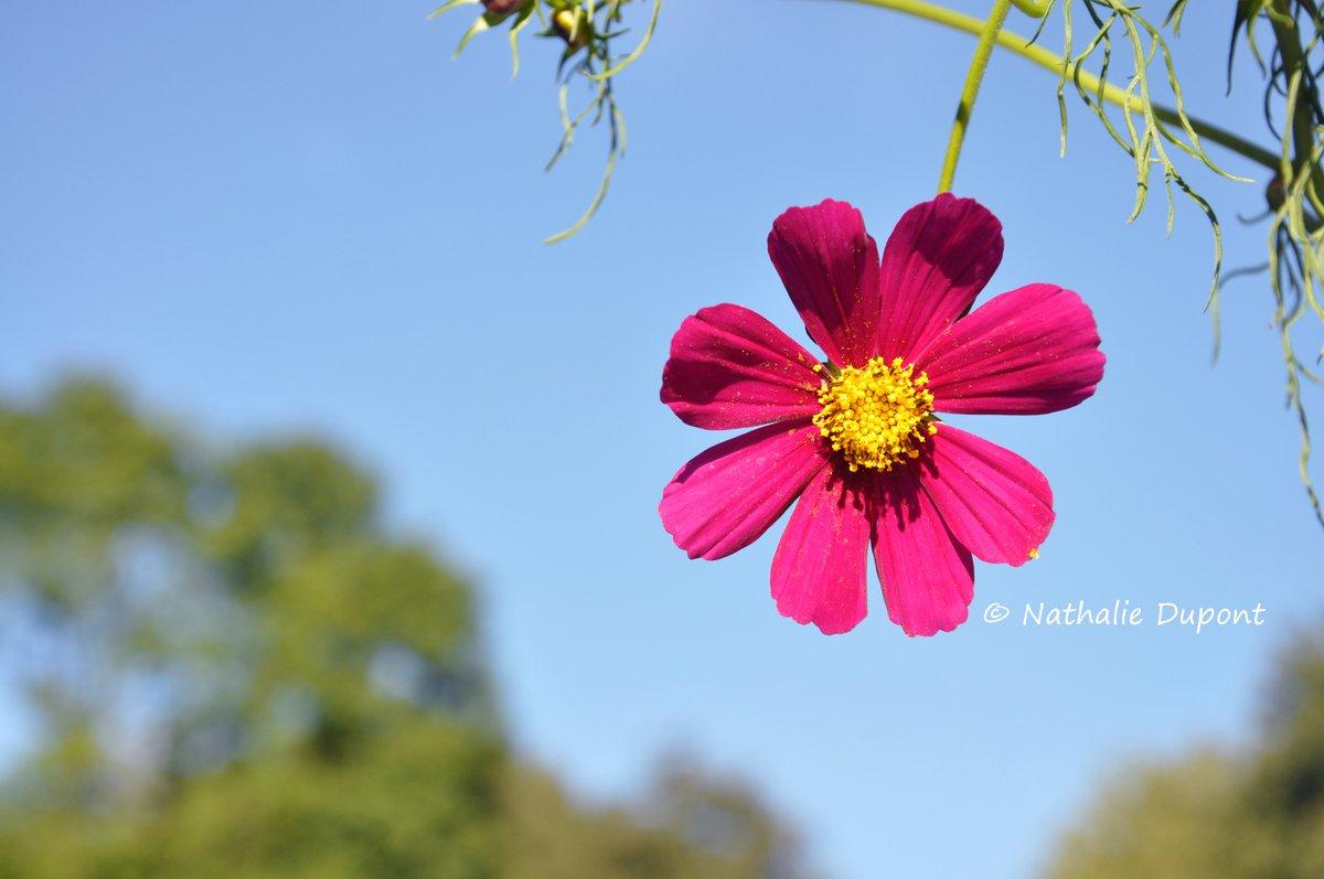 Au fil de la photo comme un soleil - Fleur au coeur noir ...