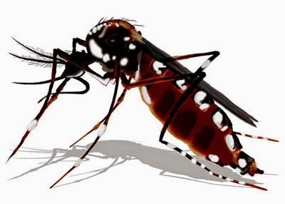 Demam Berdarah Dengue ( Gejala DBD ) Dan Cara Mengobatinya