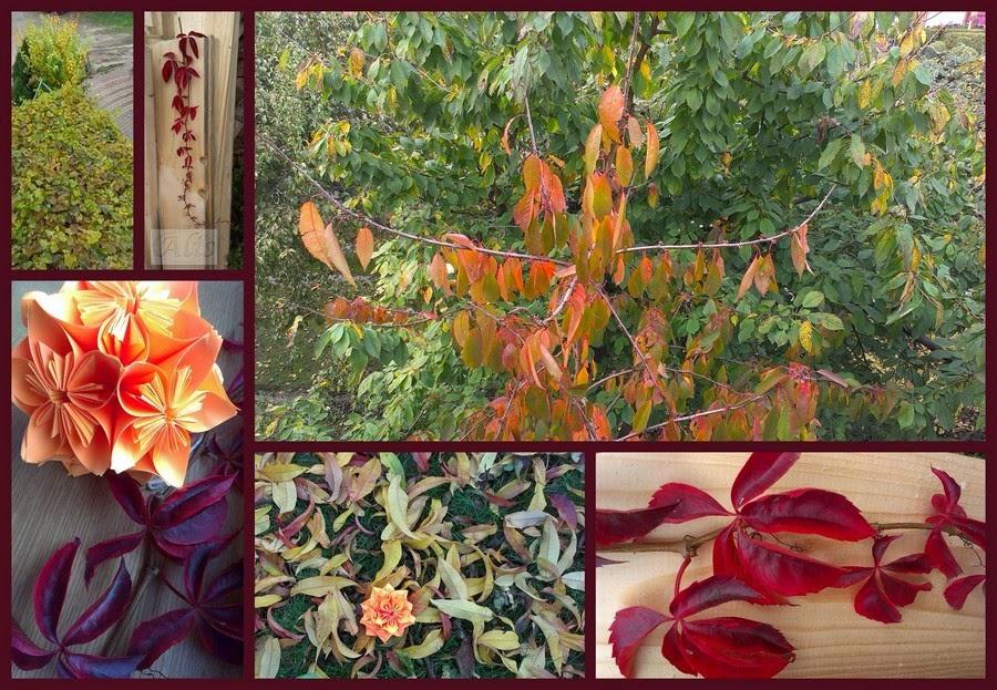 liście, jesień, kolory