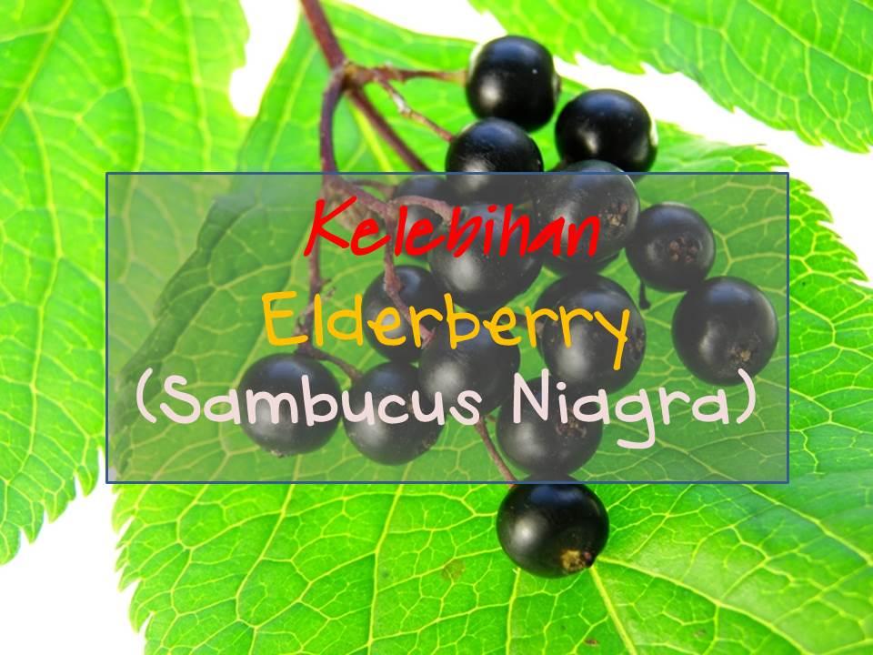 keajaiban dan kelebihan elderberry dalam vivix shaklee