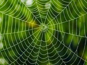 كيف تصور نسيج شباك العناكب؟