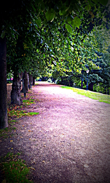 avenue of trees, park