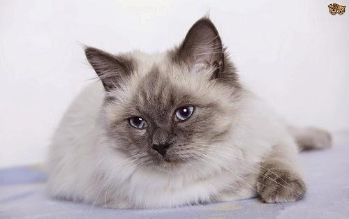 Les plus belles photos de chats mimi