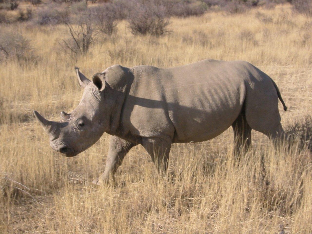 The Vietnamese Javan Rhino subspecies has 5 rhinos