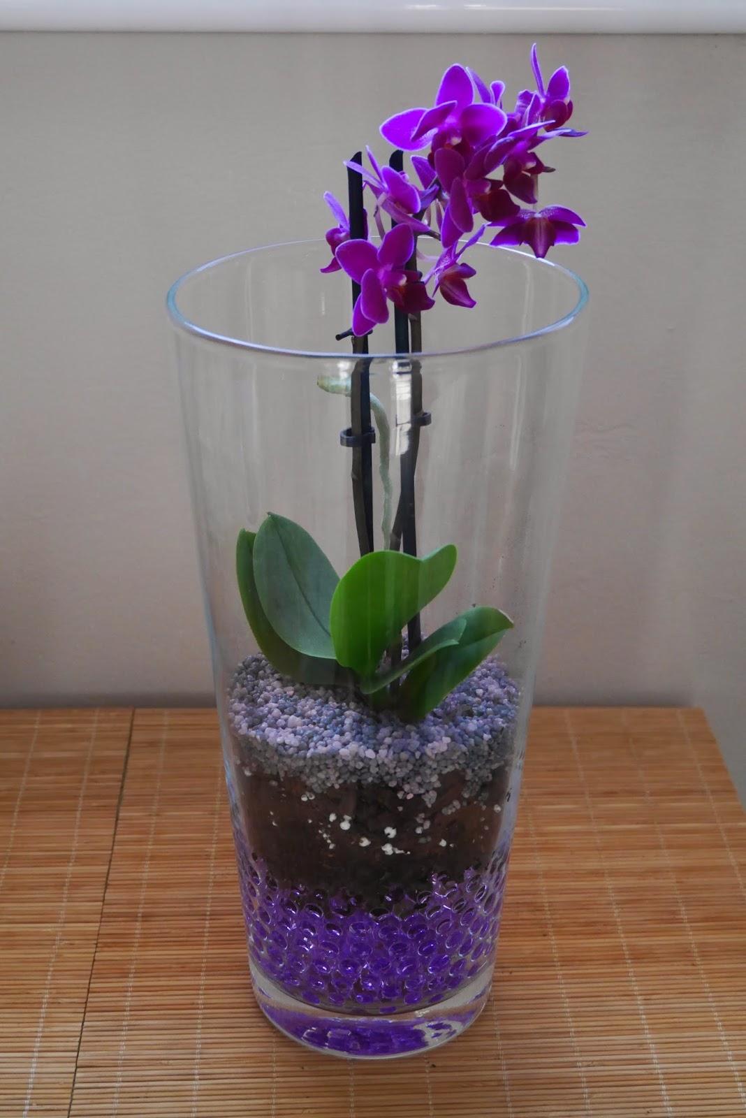 orqudea mariposa mini plantada en gel dentro de jarrn de cristal