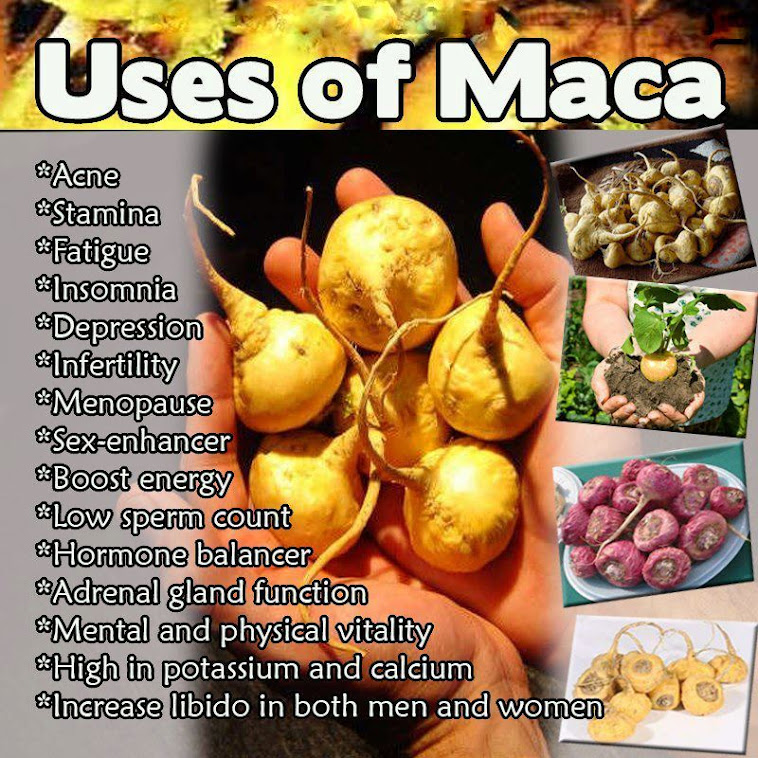 Call 0 90364 11526 0 88673 61391 Maca Products India