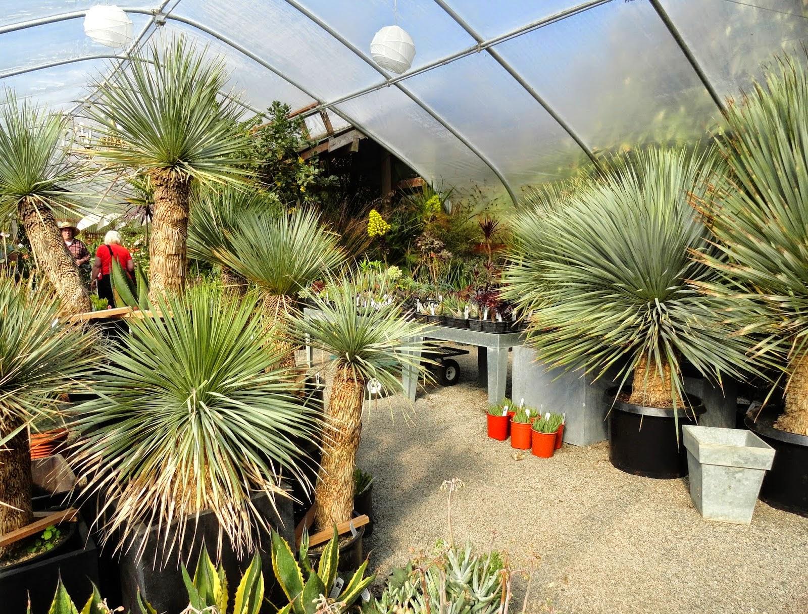 Garden Bloggers Fling Fling Preview Cistus Nursery