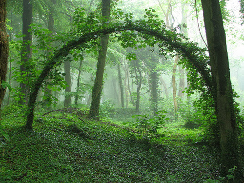 arched trees, tree, life, forest, living, earth