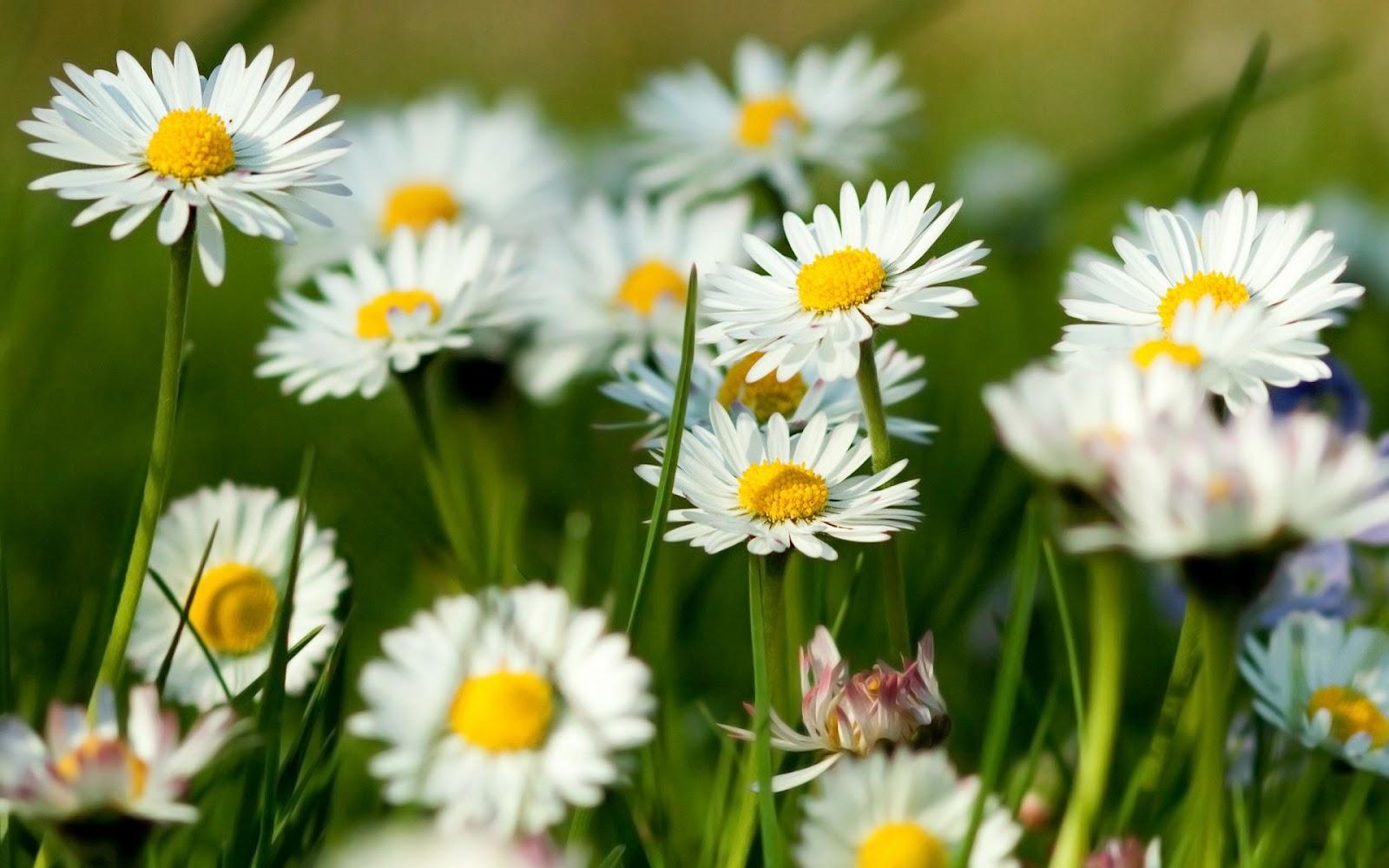 http://2.bp.blogspot.com/-6D-vcC_oeAE/UGh5i20eILI/AAAAAAAAKsU/OHJ_llGuek4/s1600/latest+flowers+hd+wallpaper.jpg