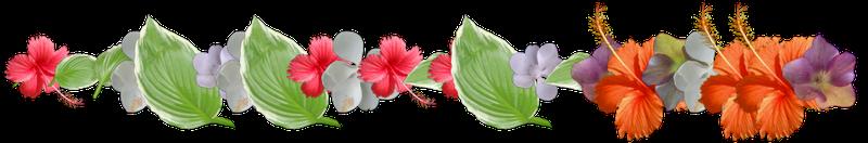 http://2.bp.blogspot.com/-6DK3pVXY-HM/ThNuW6WE3NI/AAAAAAAADO8/g0aJ5uPhPYk/s1600/flores