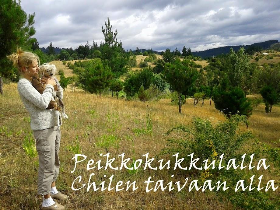 Peikkokukkulalla Chilen taivaan alla