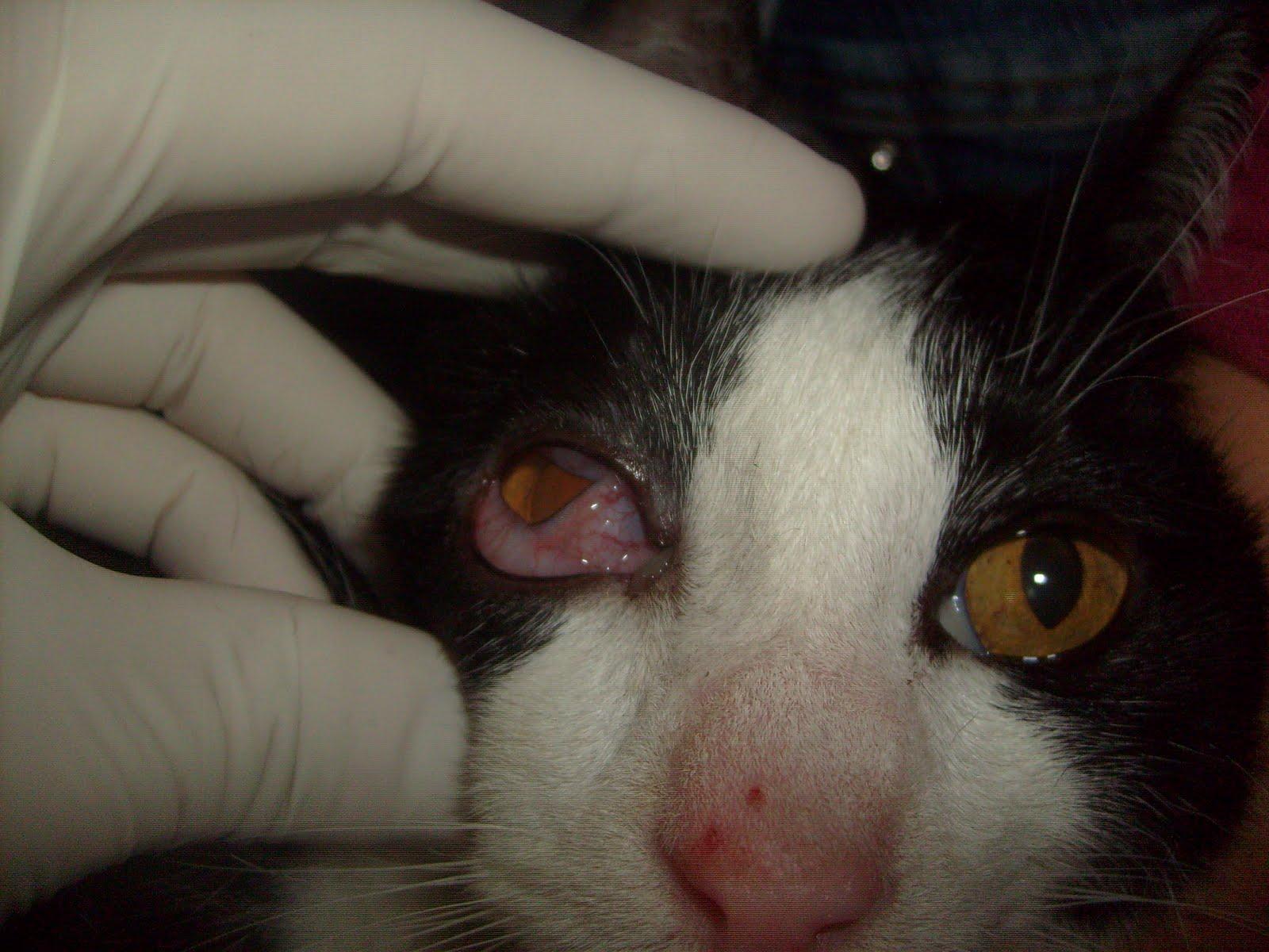 Meu Amigo Gato: GATOS: MANUAL DE INSTRUÇÕES #5F4639 1600x1200 Banheiro Adequado Do Gato