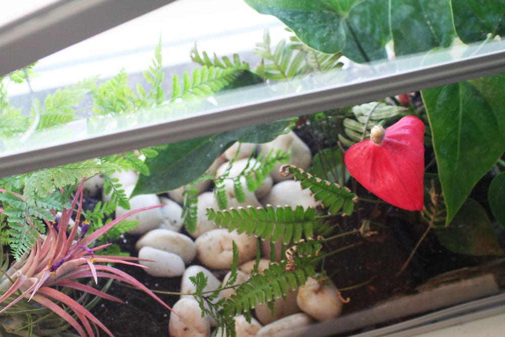 The Rainforest Garden 8 Terrarium Diy Projects