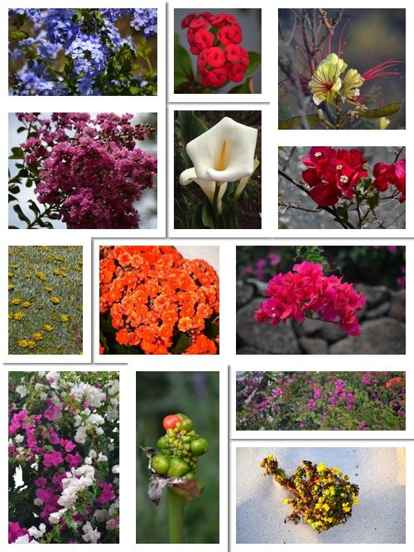Flores_para_el_fin_de_semana_ObeBlog_01