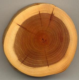 Parts of Tree (Stump)