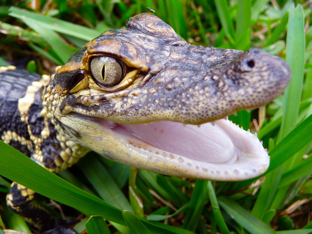 A 2 Z Reptiles The Joys of Reptile Ke...