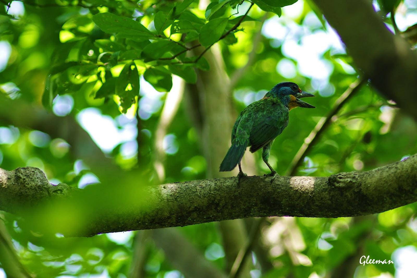 五色鳥於雞南山。