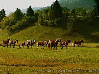 cal horse pferde caballo cheval