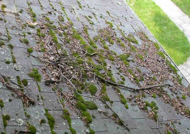 Moss, lichen, and black algae, your property's worst enemies