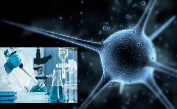 Crean células humanas que pueden detectar una enfermedad y curarla Celula1