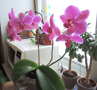 цветы, орхидея,flowers.jpg, orchids , flowers on the window ,