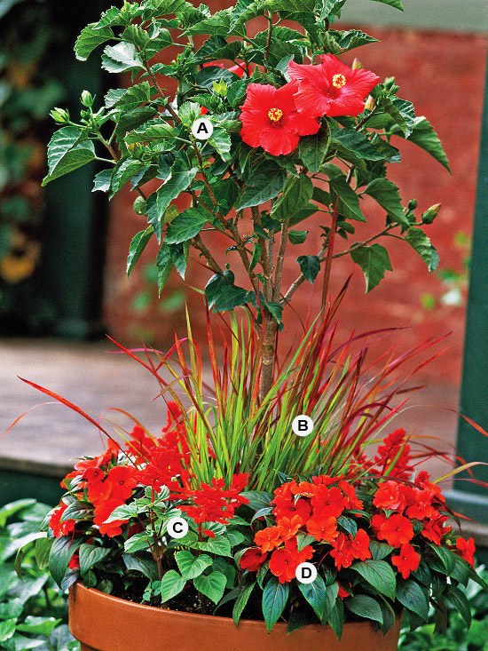 New Home Interior Design Great Container Gardens