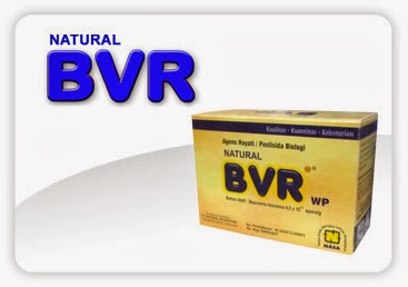 Natural BVR dapat diaplikasikan untuk tanaman :  Padi,Cabai, Tomat, Kacang panjang, Buncis, Semangka, Kentang, Bawang Merah & Daun, Kubis, Apel, Mangga, Coklat