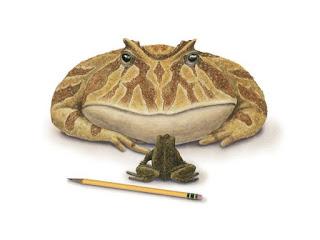 Nel tardo cretaceo tra 70 e 66 milioni di anni fa viveva la rana diavolo