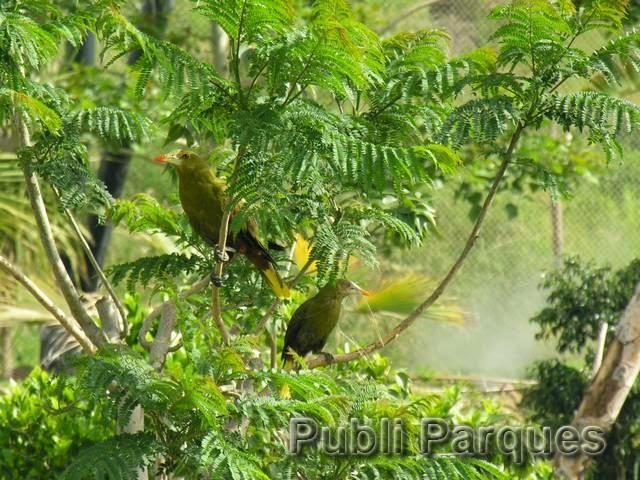 aviario terra natura benidorm