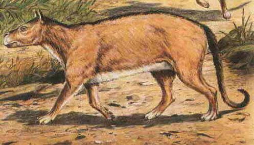 mamiferos de hace 65millones de años Phenacodus
