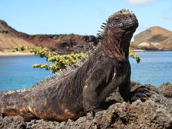 Галапагосские острова фото видео фильм Дарвин и