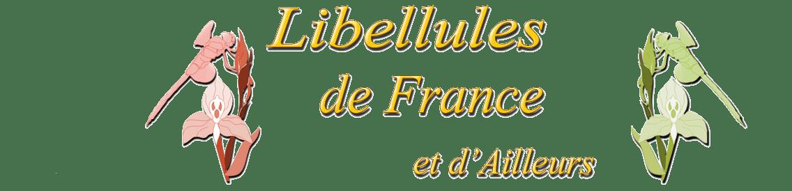 LIBELLULES de FRANCE et d'Ailleurs - 02