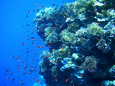 (Egypt) - Sharm el-Sheikh - Ras Mohammed National Park