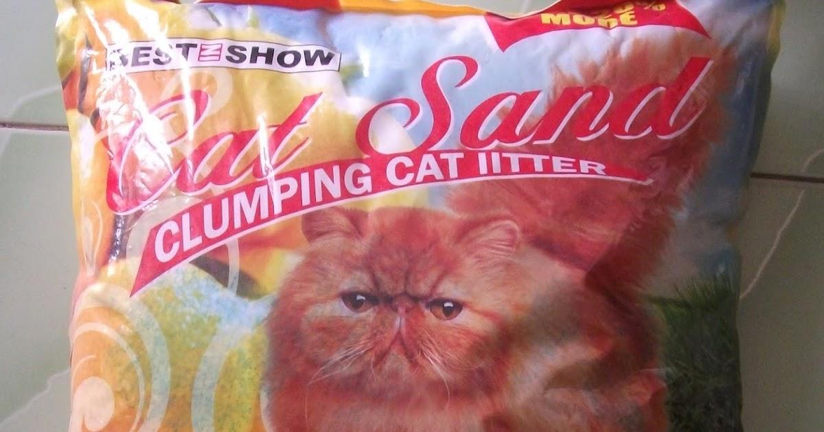 Manfaat Pasir Zeolit Kucing Persia