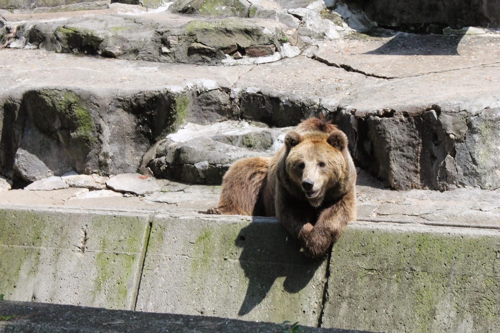 Seoul Zoo, Seoul, зоопарк в сеуле, сеул, корея, зоопарк, медведь