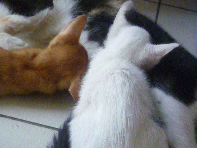 Wattie S Homemade Kucing Oh Kucing