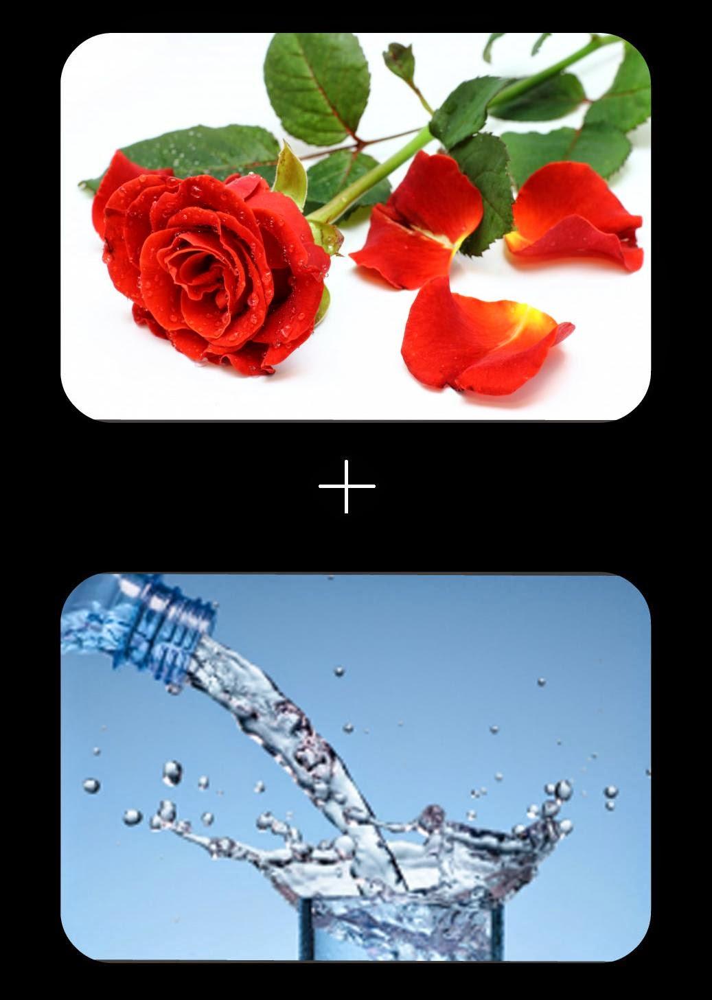 DIY Lotion tonique à l'eau de rose - Les Mousquetettes