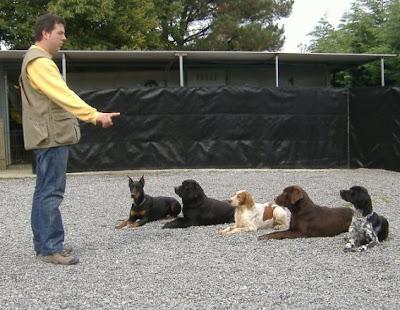 Los concursos de obediencia Canina