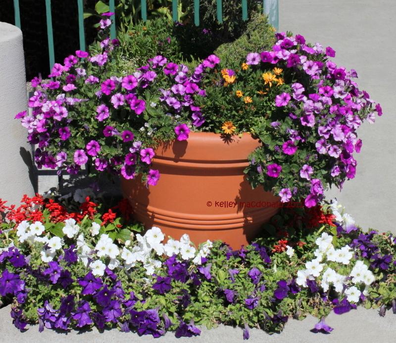 Il giardino del brocante aprile 2013 for Surfinia balcone