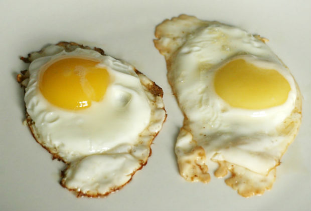 Sunny Side Eggs: Barred Plymouth Rock vs. Supermarket Brand