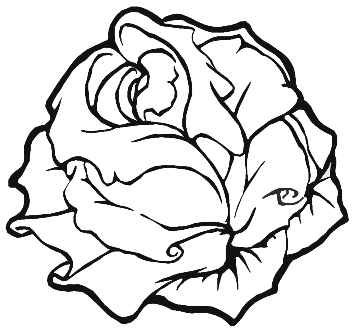 Line Art Of Rose : Line art roses up for adoption reusage