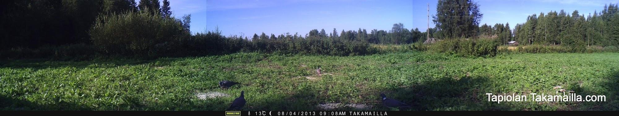 Moultrie Panoramic 150 maastossa