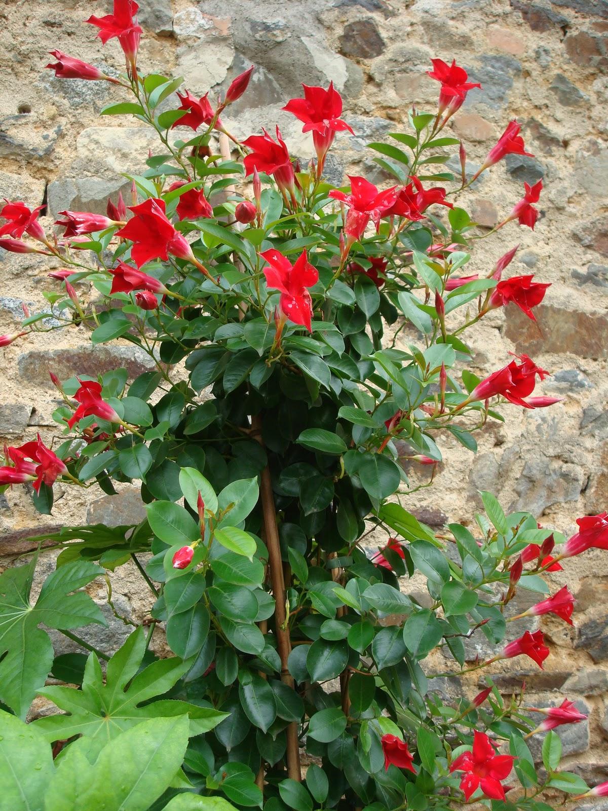 Fleuriste isabelle feuvrier les plantes de mon jardin en for Derniere tonte gazon avant hiver