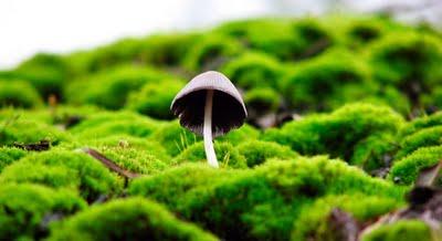 johny magazine magic mushrooms can improve spiritual benefits