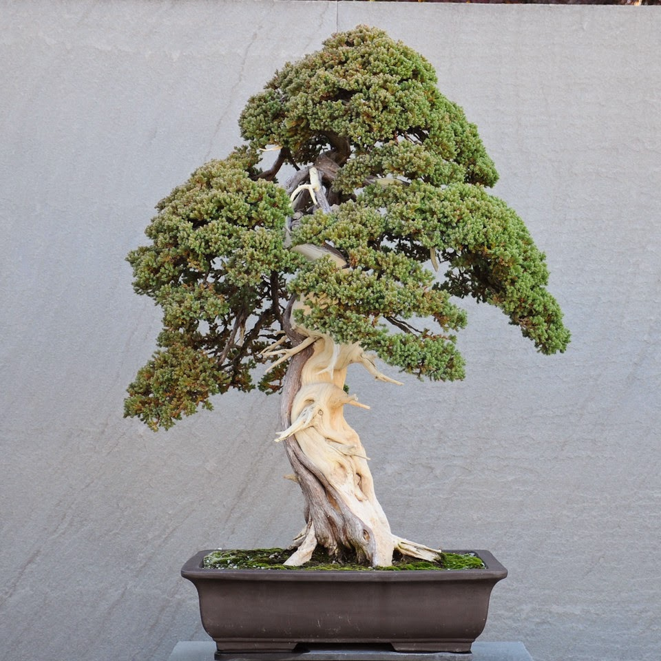 Asociacion Valenciana De Bonsai National Bonsai Amp Penjing Museum