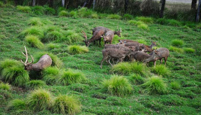 Ranch Peternakan Rusa Pulau Alor