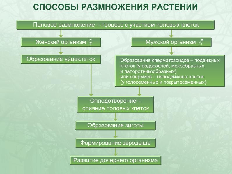 Способы размножение растений схема