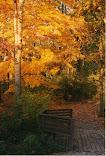 An Autumn Sojourn