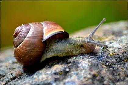ครีมหอยทาก (Snail Cream)