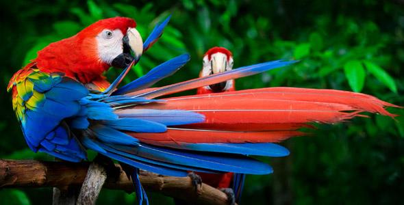 Burung nya indah indah kan coba mana yang anda suka dari gambar burung